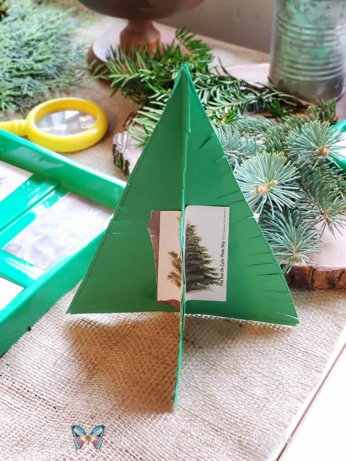 Pine Tree Life Cycle - Winter in the Woods - Preschool Curriculum - Experience Early Learning
