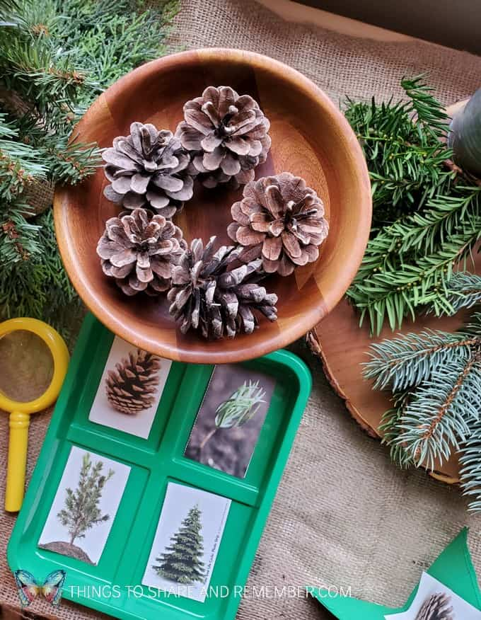 Pinecones and greenery - Winter in the Woods - Preschool Curriculum - Experience Early Learning