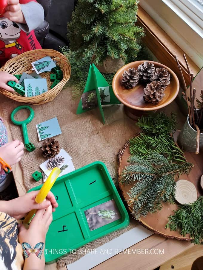 pine tree investigation table activities