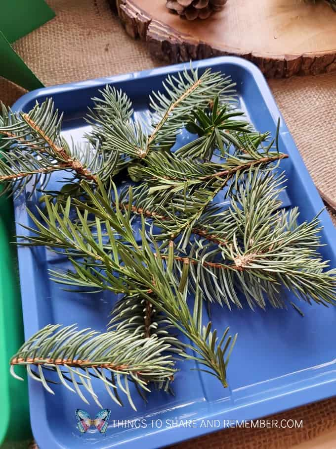 design your own pine tree