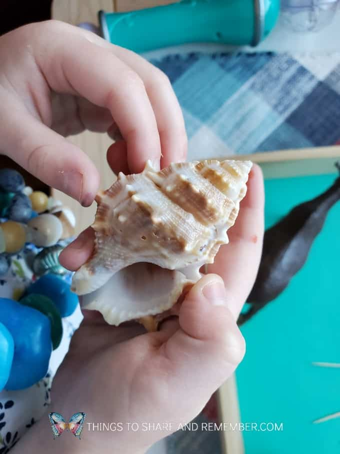 pokey shell