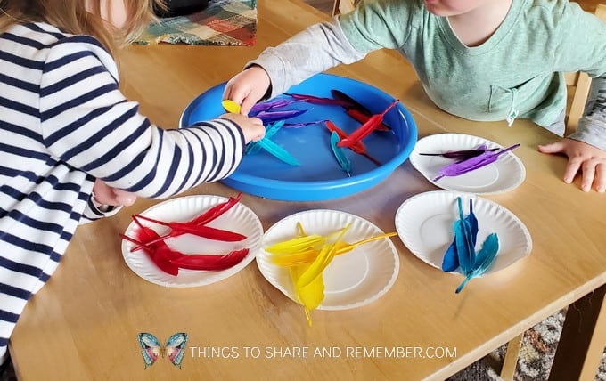 sorting feathers by color for Birds & Eggs preschool curriculum theme