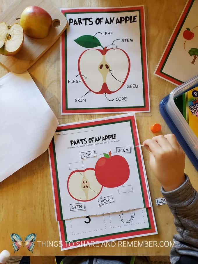 parts of an apple printable apple activities