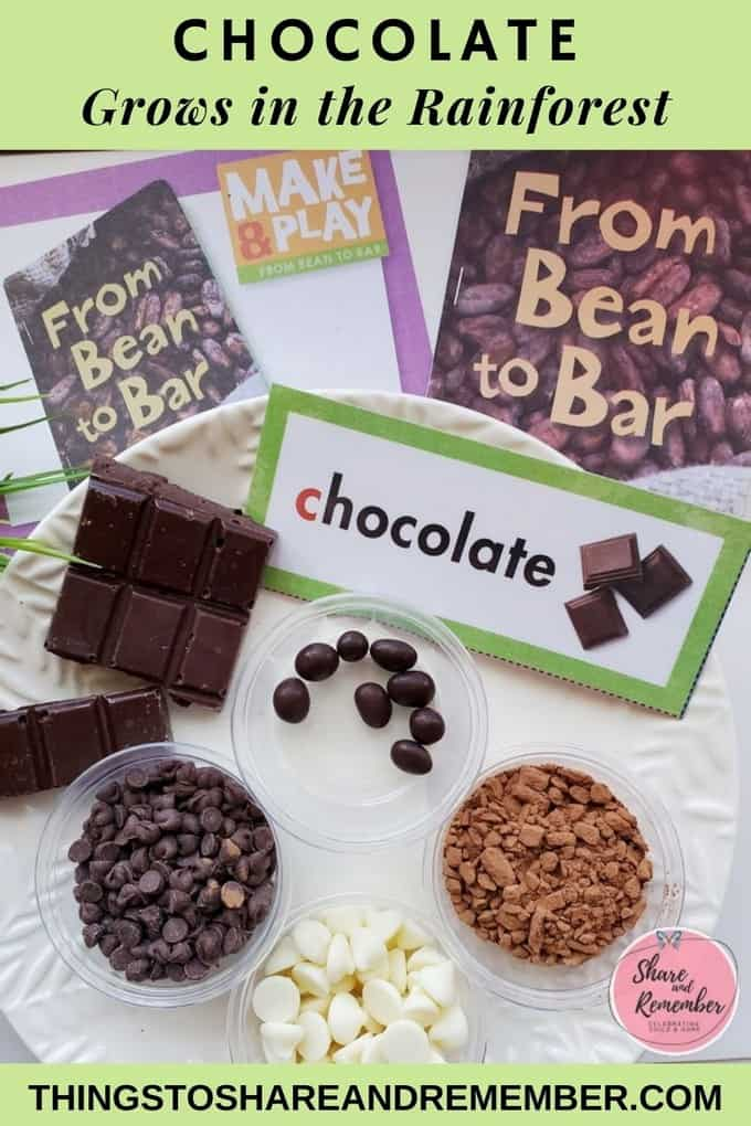 chocolate grows in the rainforest preschool lesson from Experience Preschool