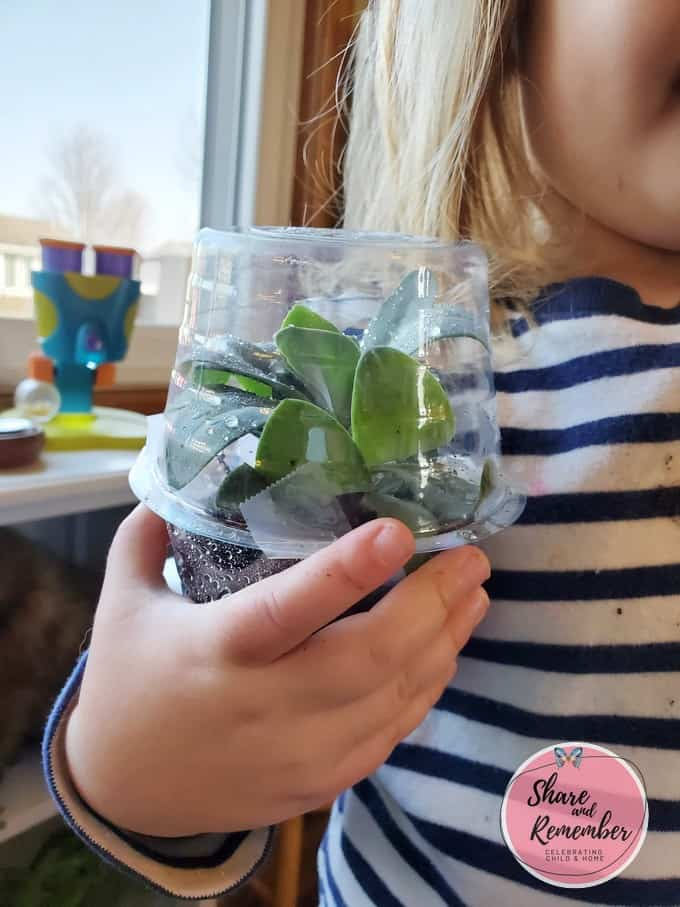 Mini Rainforest Terrariums