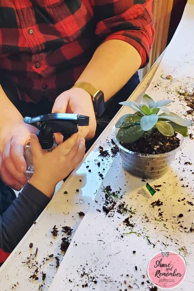spraying a plant