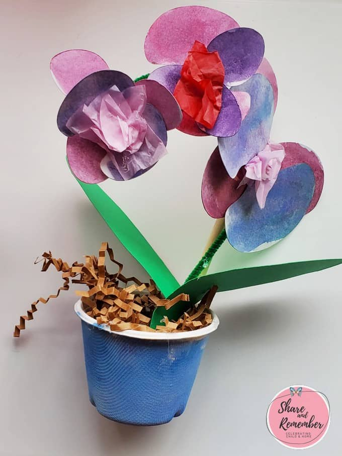Amazon Orchids | Explore the Rainforest Experience Preschool theme