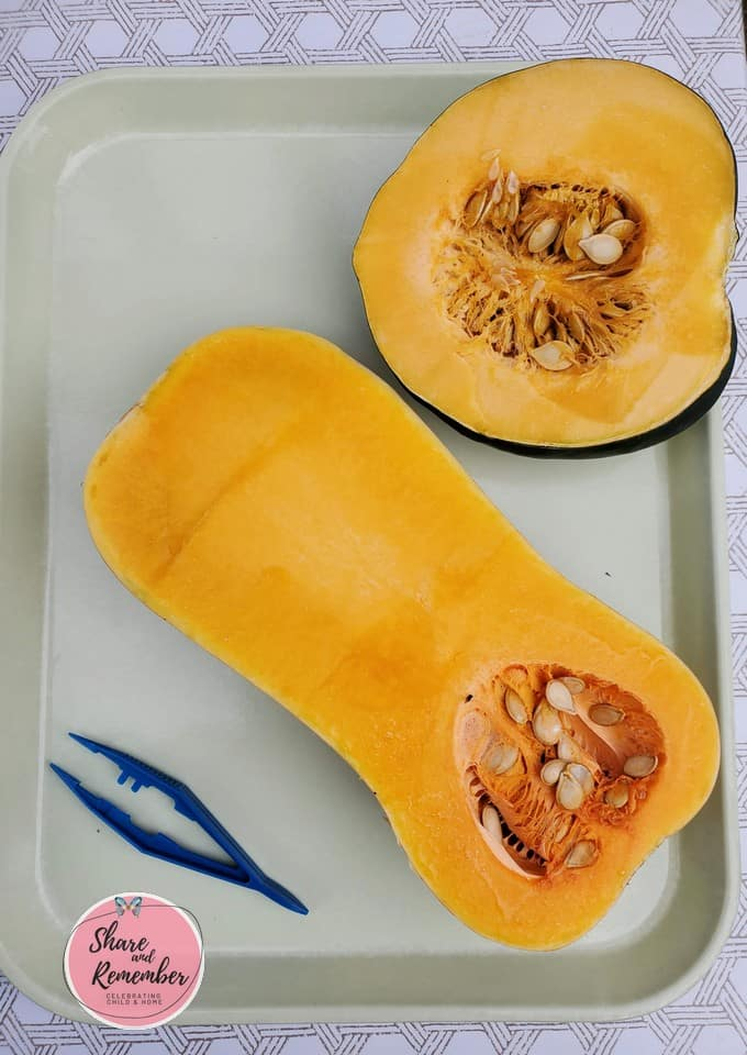 Butternut and Acorn squash - where do seeds come from STEAM Station