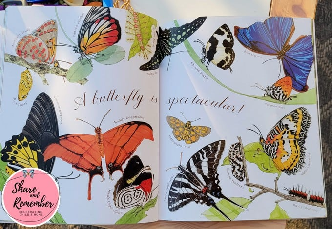 Butterfly images in the book titled A Butterfly is Patient.