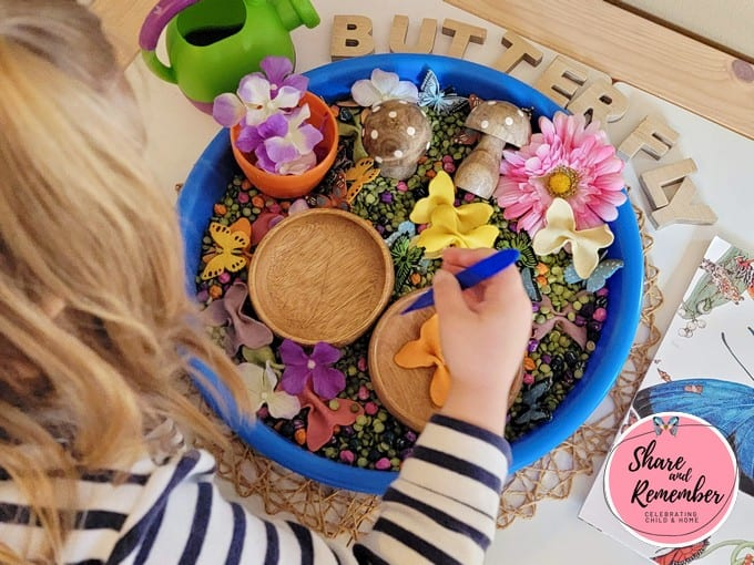 Preschooler searching for matching butterfly in butterfly sensory tray activity