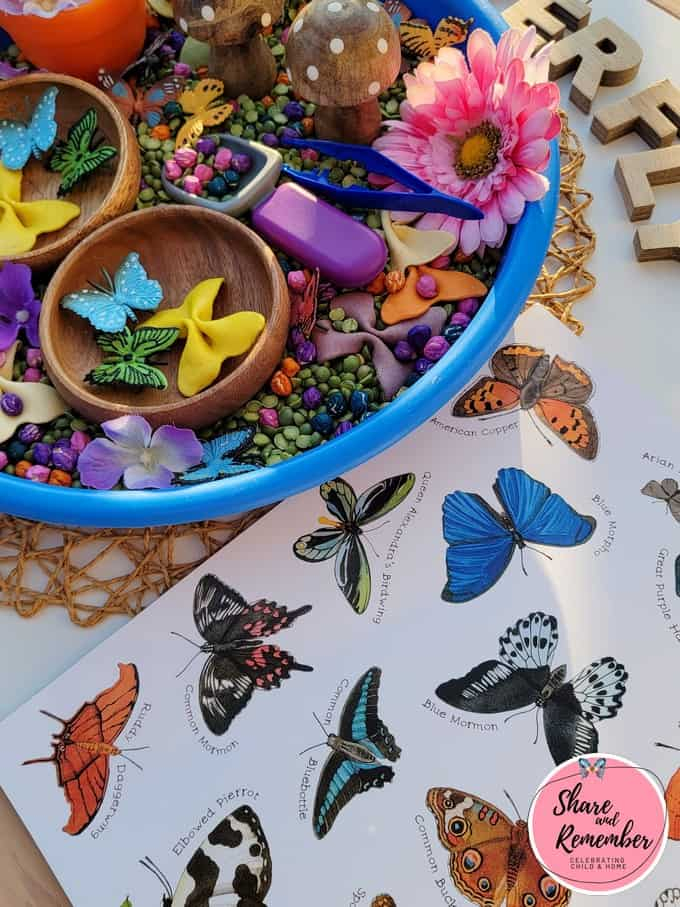 A Butterfly is Patient book coordinates with sensory tray.