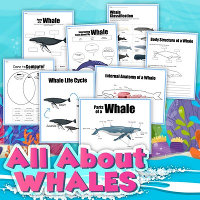 All About Whales Printables