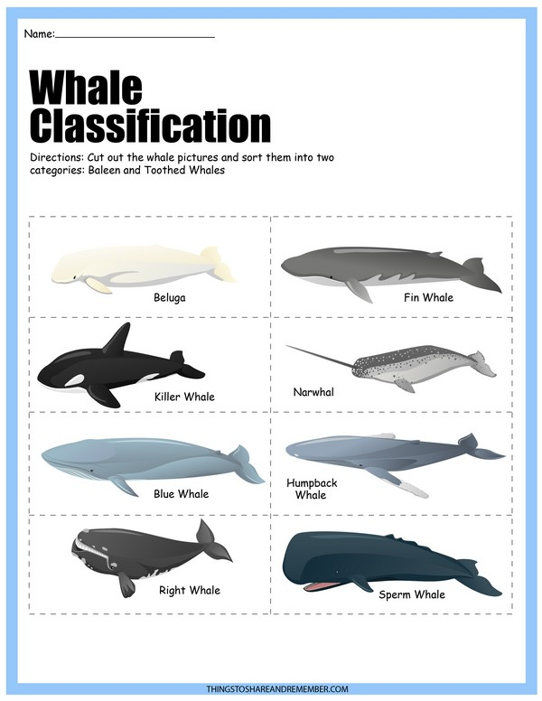 Whale Classification Poster